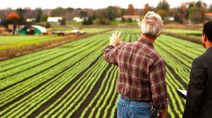 Нюансы открытия агробизнеса