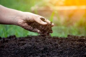 Подготовка почвы к сезону